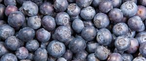 Fresh bilberries / Image source: linnea.ch
